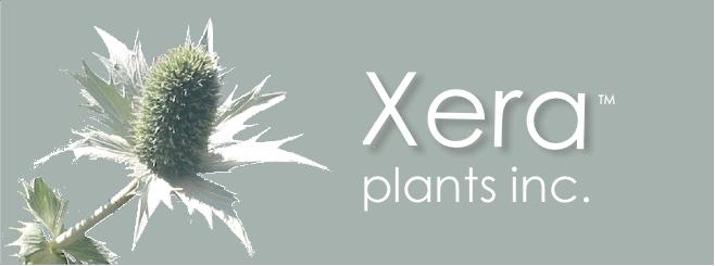 Xera Plants
